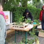 Uczestnicy przy stoisku z roślinami